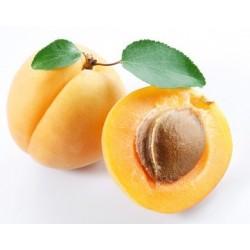 Huile de noyaux d'abricots